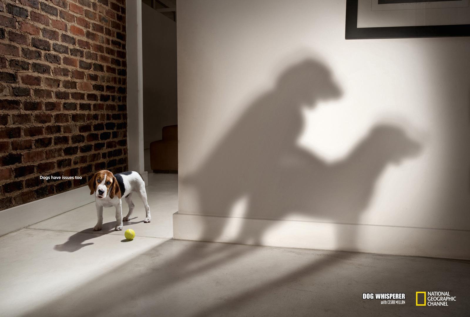 national geographic dog whisperer