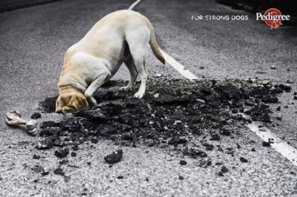 cibo per cani molto forti