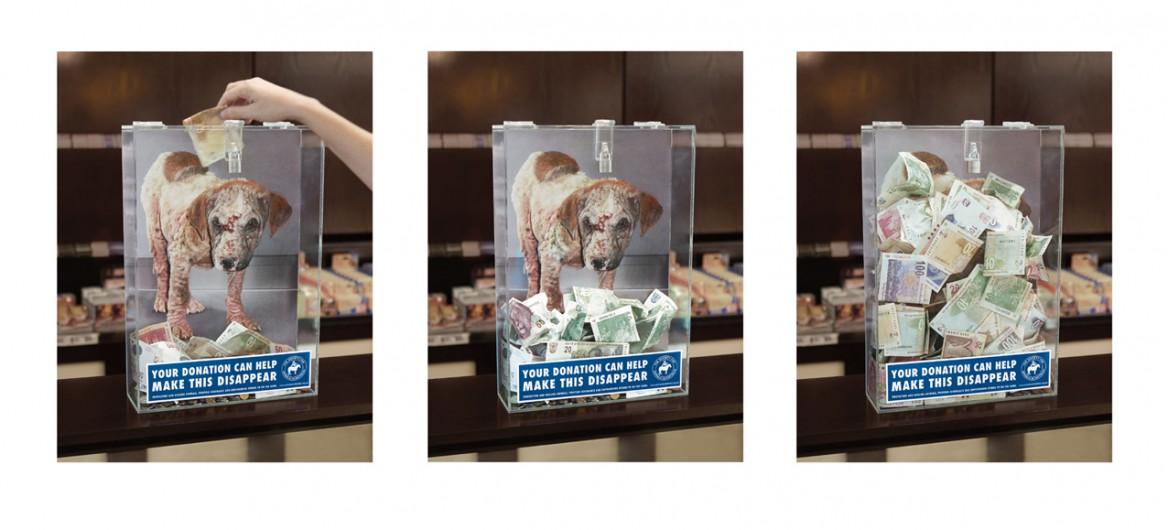 donazione cane ferito
