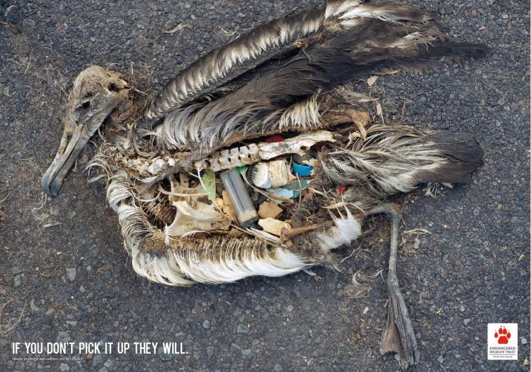 inquinamento uccide gli animali