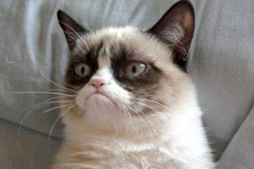 Condividere sui Social una pubblicita un caso di Ads virali nel settore Pet Care kitty poo club